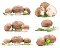 构成蘑菇 库存图片