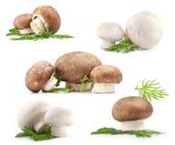 构成蘑菇 免版税库存照片