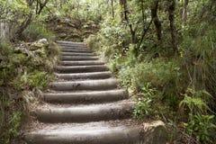 δάσος σκαλοπατιών Στοκ φωτογραφία με δικαίωμα ελεύθερης χρήσης