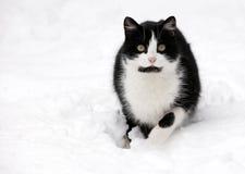 белизна снежка кота Стоковые Изображения