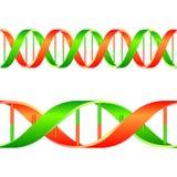 脱氧核糖核酸字符串 库存图片