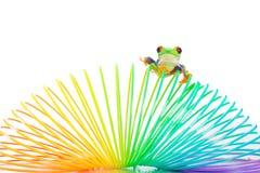 在五颜六色的卷里面的红眼睛的雨蛙 免版税库存照片