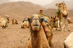 Египет Стоковые Изображения