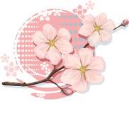 Вишня цветения включая форму вектора Стоковое фото RF