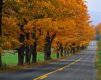 与秋天结构树的乡下公路 免版税图库摄影