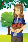 苹果农夫 库存图片