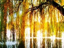 在结构树杨柳的湖 免版税库存照片