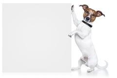 横幅狗 免版税图库摄影