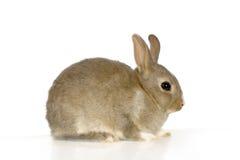 кролик Стоковое Изображение RF
