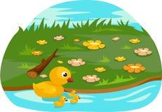 鸭子系列 图库摄影