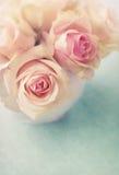 空白的玫瑰 免版税图库摄影