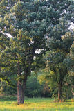 伊利诺伊橡木大草原 免版税图库摄影