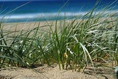 海滩沙丘沙子 库存图片