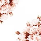 框架新鲜的玫瑰 免版税库存照片