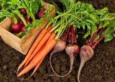 农厂新鲜蔬菜 库存图片
