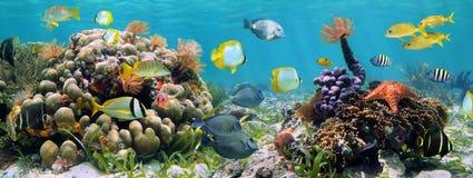 панорамный риф Стоковая Фотография