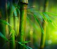 бамбук Стоковые Фото
