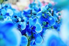 蓝色的兰花 免版税库存照片