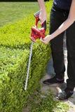 триммер изгороди Стоковое Фото