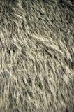 αντέξτε τη γούνα Στοκ Φωτογραφίες