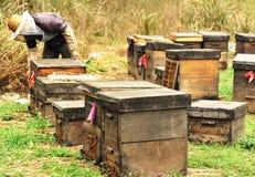 蜂种田 图库摄影