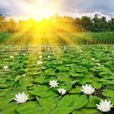 在春天日出的湖 图库摄影