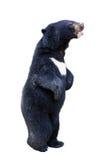 婴孩查出的熊黑色 图库摄影