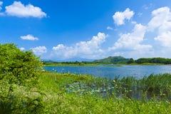 заболоченное место ландшафта озера Стоковые Фотографии RF