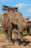 等候大象乘客 免版税库存图片