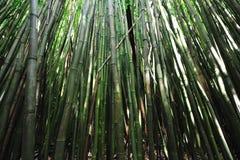 竹森林夏威夷毛伊 免版税图库摄影