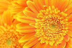 λουλούδι ανασκόπησης Στοκ Εικόνα