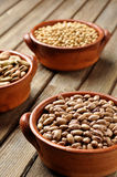 豆类 免版税库存照片