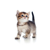 向上查找月大一个的小猫 图库摄影