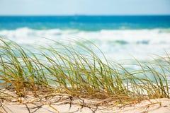 海滩沙丘草绿色俯视含沙 免版税库存图片