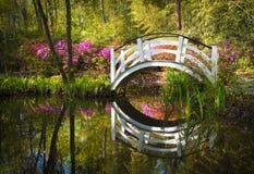 杜娟花开花的查尔斯顿花园春天 免版税库存图片