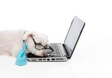 疲倦的计算机狗膝上型计算机劳累过度的休眠 库存照片