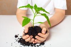 πράσινο φυτό Στοκ Φωτογραφίες