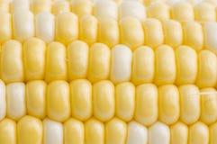 玉米 图库摄影