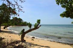 海滩美丽的海岛沉寂兔子 库存图片