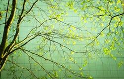 зеленый цвет выходит новой Стоковое Изображение RF