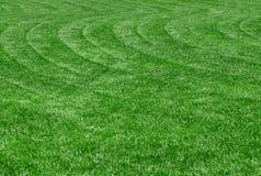 理想的草坪 免版税库存图片