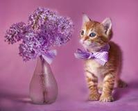 忠勇小猫红色 免版税库存照片