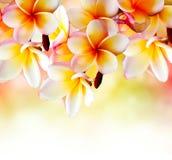 花热带杏仁奶油饼的温泉 图库摄影