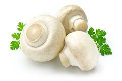 蘑菇白色 免版税库存图片