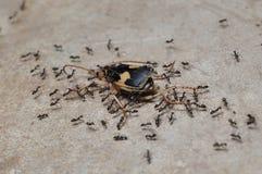 蚂蚁工作者 库存照片