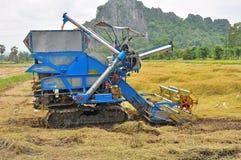 εργαζόμενος αγροτικού συγκομίζοντας ρυζιού Στοκ εικόνα με δικαίωμα ελεύθερης χρήσης