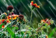 下雨夏天 免版税库存照片