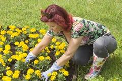 执行从事园艺的愉快中间的年龄某些妇女 库存照片