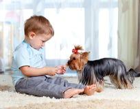 男孩逗人喜爱的狗提供的孩子宠物约克 库存照片