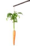 在棍子的红萝卜 免版税库存图片